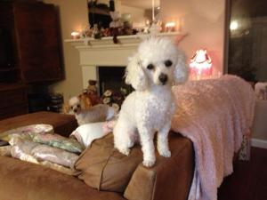 Daisy and Princess - (Daisy is on top of the couch, and Princess is in the background)